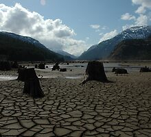Mud flats by hollymont