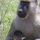 Baboon Mother by Abigail Rose