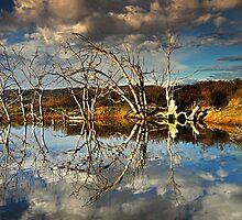The Dali Trees by David Haworth