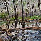Cypress Creek in Wimberley, Texas by HDPotwin