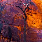 Burning Tree, zion by photosbyflood