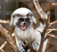 Baby Monkey by Teresa Zieba