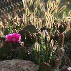 Desert Ambience by Arla M. Ruggles