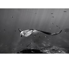 Manta Cleaners Photographic Print
