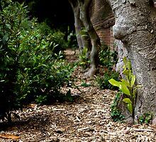 Trees by elyptika