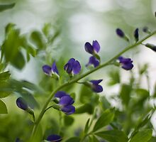False Indigo by Amanda Keaton