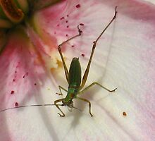 Hanging out on the Stargazer Lily by CynLynn