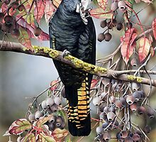 Black Cockatoo by HeidiWillis