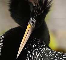 Anhinga Agility by William C. Gladish