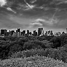 Central Park Canopy by Mary Ann Reilly