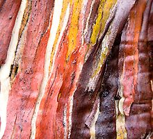 Snow Gum patterns, Labyrinth, Tasmania by Andy Townsend