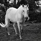 White Pony by Kristi Robertson