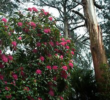 Rhododendron Forest by seanseen