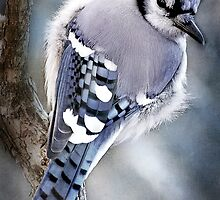 Mr Blue Jay by Karen Scrimes