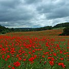 Poppy Fields Forever by RoystonVasey