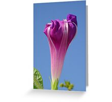 Deep Magenta Morning Glory Flower Bud Against Sky Greeting Card