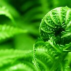 Fern Birth by magneta