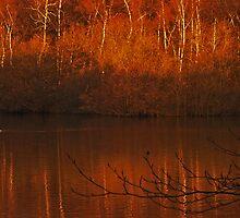 Silver Birch, Golden Light by WatscapePhoto