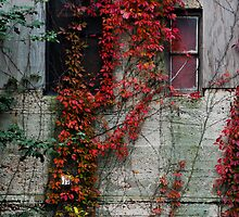 Urban Nature by Charles Plant