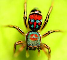 colorful spider by vickieart