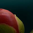 Tear of a Flower by KitPhoto
