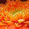 Radiant Orange Flower