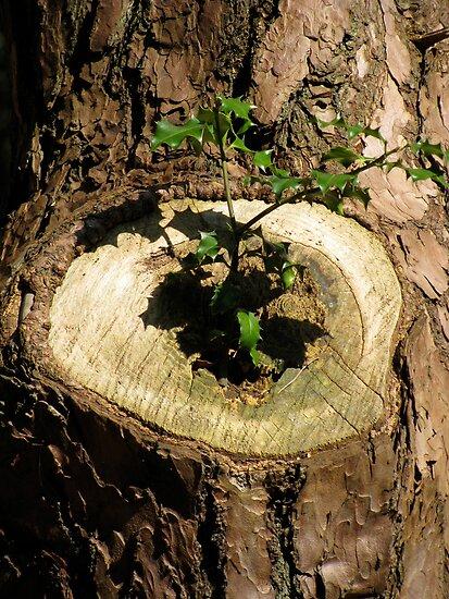 Cuckoo in the nest? by Ian Ker