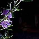 Westringia Fruticosa by Elise Lidgett