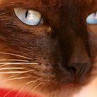 Feline stare by Pamela Troni