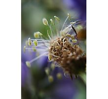 Little dancers  (from wild flowers collection) Photographic Print
