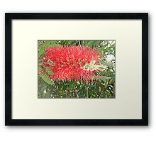 Red, Green & Aussie Framed Print