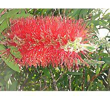 Red, Green & Aussie Photographic Print