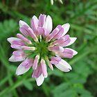 Wild  Flower by Ginny York