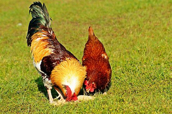 Chickens Sharing Food by Linda Yates