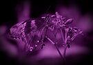 Butterfly in Purple by Sandy Keeton