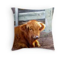Baby Highlander Throw Pillow