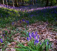 Bluebells at Coniston by Simon Hathaway
