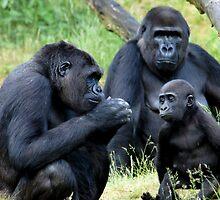 Gorilla Wisdom by ApeArt