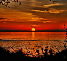 A Rosebud Sunset  by KeepsakesPhotography Michael Rowley