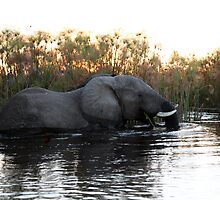 Elephant in the Reed Bed by nymphalid