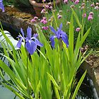 Irises by the pond by sharoncohen