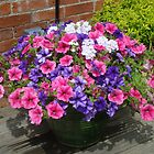 Basket of Petunias by sharoncohen