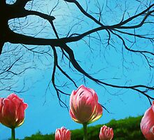 Tulips by A. F. Branco