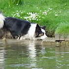 Paddling Dog by sharoncohen