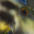 Leather Eye by Aengus Moran