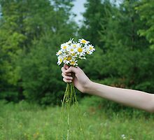 A Hand Full Of Daisies by photographyjen