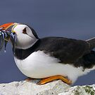 Puffin with Sandeels by David Lewins LRPS