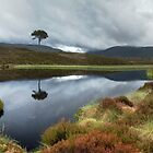 Lochan agus craobh by Ranald