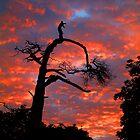 Fire in the Sky by TREVOR34