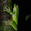 frog (green) by steveault